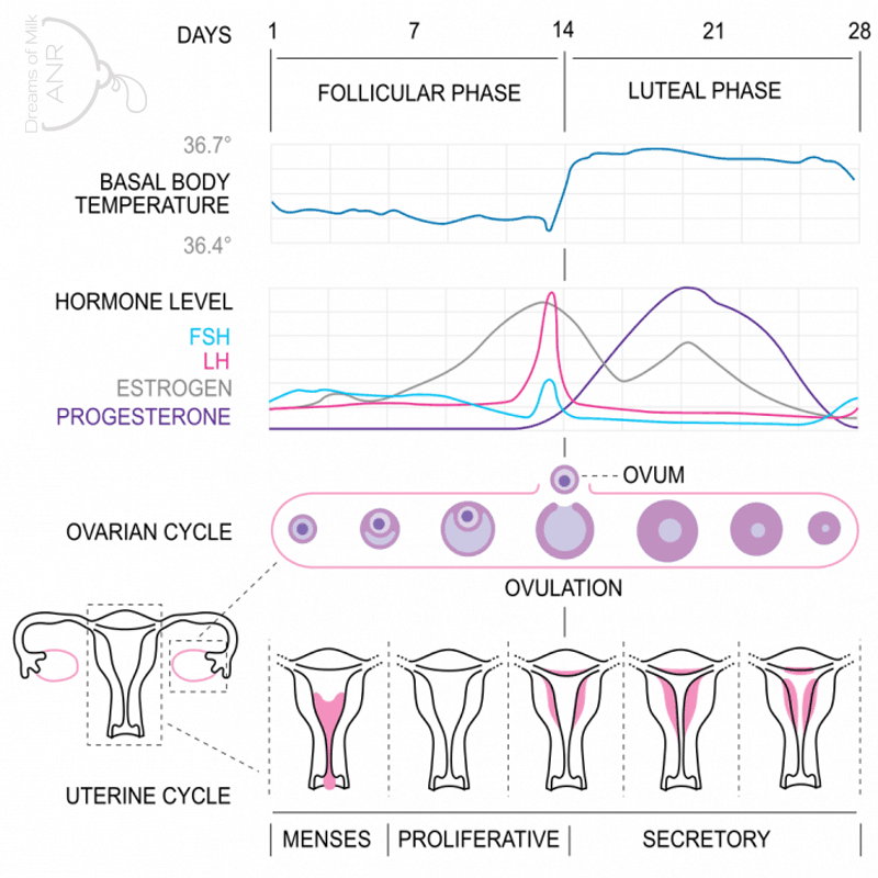 What Is Progesterone? - Dreams of Milk ANR
